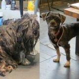L'incroyable transformation d'Ellen, petite chienne errante abandonnée de tous (Photos)