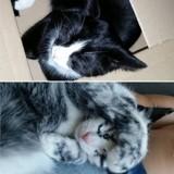 A cause d'une maladie rare, ce chat a un pelage hors du commun