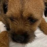 Balade en forêt : la vétérinaire voit son chien et comprend que quelque chose de grave est en train de se passer !