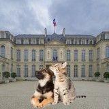 Ces candidats aux élections présidentielles qui s'engagent pour les animaux de compagnie