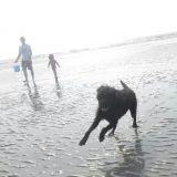 L'album photos des vacances de vos animaux !