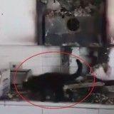 Ce chat un peu trop curieux a provoqué un incendie causant des milliers d'Euros de dégâts