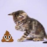 Ces chatons photogéniques posent de façon unique avec… des émojis !