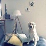 DIY : quand l'empreinte de votre chien devient la plus belle des décorations murales