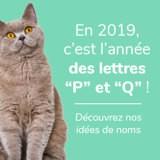 Nom de chat commençant par la lettre P ou Q : nos idées pour l'année 2019 !