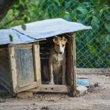 Les voisins repèrent un chien dans un enclos insalubre et le signalent, mais ils ignoraient un élément crucial