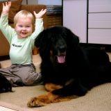 Si votre enfant est allergique aux chiens… adoptez un chien