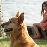 L'enfant face à la mort de son animal : comment l'aider à faire son deuil ?