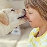 10 photos qui prouvent que votre enfant a besoin d'un chien