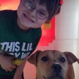 Une chienne errante croise la route d'un enfant autiste : un miracle se produit