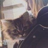 Voici Bruno, le chat qui est le «nouvel amour» de la vie d'Enora Malagré