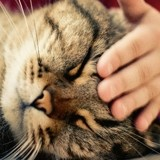 8 erreurs que commettent (presque) tous les propriétaires de chat