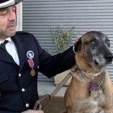 Presque aveugle, un chien gendarme reçoit une médaille devant son maître ému aux larmes