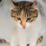 Comment prendre en charge un animal domestique blessé ?