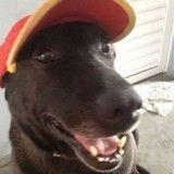 Abandonné dans une station-service, ce chien trouve un nouveau sens à sa vie !
