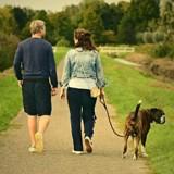 Un américain sur deux préfère quitter son partenaire plutôt que son chien