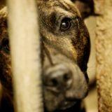 230 chiens euthanasiés en Roumanie, les défenseurs des animaux scandalisés