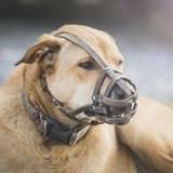 L'évaluation comportementale du chien : son but, son déroulement et ses conséquences