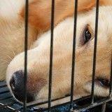 Expérimentation animale : où en sommes-nous ?