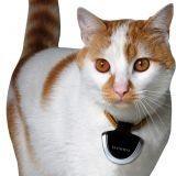 Une caméra pour chien et chat !