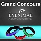 Concours Eyenimal : avez-vous gagné un collier lumineux pour votre chien ?