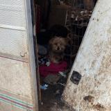 Val d'Oise : 11 chiens ont été découverts, sans eau ni nourriture à leur disposition