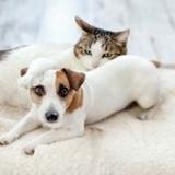 Exclu : 50% des français possèdent un animal domestique !