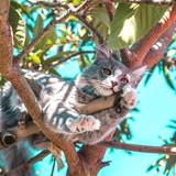Bons plans : Les indispensables de l'été pour votre chat !