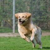 Bons plans : Les indispensables de l'été pour votre chien
