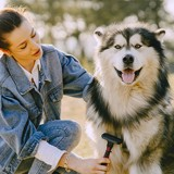 Tondeuses pour chien : 3 offres à moins de 30€