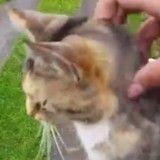 Un chat interrompt quotidiennement la tournée du postier pour se faire caresser (Vidéo du jour)