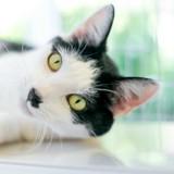 Comment faire pour que mon chat apprenne son nom et y réponde ?