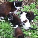 SOS pour sauver une chatte et ses petits : 3 heures plus tard c'est la douche froide pour les bénévoles