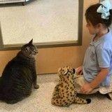Personne ne voulait de cette chatte obèse jusqu'à ce qu'une fillette décide de la mettre au régime !