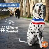 Interview exclusive : Bella Lemaire, la chienne candidate aux Municipales 2020 qui milite pour la cause animale