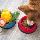 Quelles sont les meilleures croquettes bio pour chien en 2021 ?