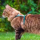 Quel est le meilleur harnais pour chat en 2021 ?