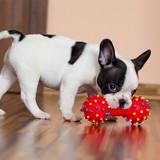 Les meilleurs jouets à couinement pour chien en 2021