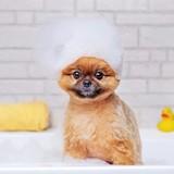 Quels sont les meilleurs shampooings pour chien en 2021 ?