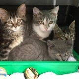 L'association Félins Possible 50 fait des miracles pour les chats des rues