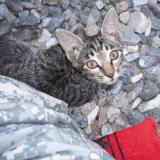 Comment une jeune militaire et un chaton se sont sauvés l'un l'autre en Afghanistan