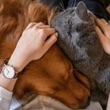 Une femme vole 22 chats, 2 chiens et 2 rats : elle donne une triste explication
