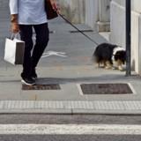 Elle marche avec son chien vers un centre commercial : deux hommes s'approchent et la situation dégénère