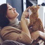 Peut-on prévoir une allergie au chat avant d'adopter ?