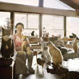 Une femme prend soin de 700 chats dans son refuge (Vidéo)