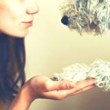 Medical Flair : des chiens de famille ou de refuge formés à détecter des crises d'épilepsie et d'hypoglycémie