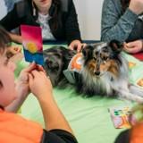 Les chiens de l'association Coeur d'Artichien viennent en aide aux femmes détenues de Nantes