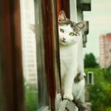 4 astuces pour empêcher votre chat de tomber du balcon