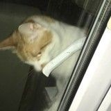 Un chat enferme son humaine sur son balcon et en fait une star du Web