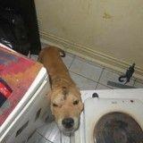 Il faut prouver à ce chien maltraité que l'homme peut être bon !